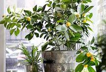 grow / herbs, veggies, edible flowers, container garden ideas and future backyard inspiration...