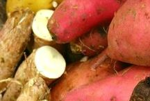 caribbean fruits & vegetables / fruits and vegetables from Caribbean islands!  / by sherry spice