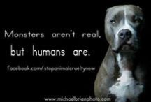 No excuse for animal abuse / Be a voice for the voiceless