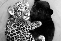 Animals / by Jada Grant
