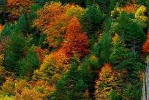 Natureza - Nature / Imagens da natureza que me fascinam