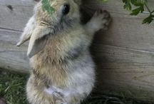 Bunny Love! / by Pam Porter