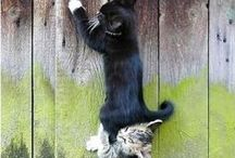 Here Kitty, Kitty... / by Pam Porter