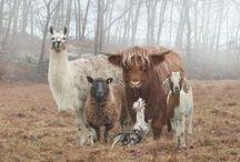 ANIMALS / by Olga