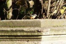 UK Bird Photos / The latest bird sightings and photographs from around the UK