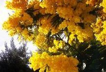 Groc. Yellow. Costa Brava / Groc, Amarillo, Yellow, Jaune. Colors Costa Brava.
