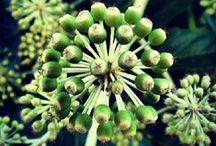 Verd. Green. Costa Brava / Verd, verde, vert, green. Colors Costa Brava