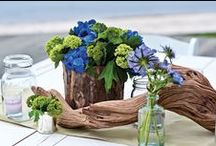 Gardening with Jars / This board is about how to creatively apply apothecary jars for growing plants, both for your garden as well as home decor.