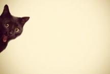 cat / by Miss N