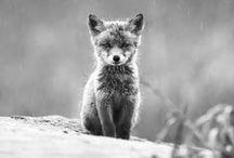ANIMALS in black&white