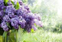 ♥ gardening ♥
