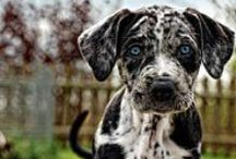 favourite DOG breeds