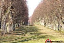 Stromy, stromy, stromy...