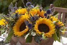 slunečnice - dekorace