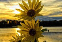 Flores / Este tablero me apasiona, me encantan estas flores me parecen exóticas aunque las vea todos los días, que las disfruten.