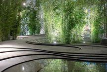 Jardines exóticos y modernos / Aquí muestro la maravillosa planta que nos da la vida el árbol.