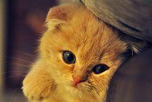 Gatos con sueños / Aquí muestro unos gatos aventureros, dormilones, y tímidos. Que los disfruten.