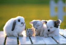 Animales / Aquí muestro escenas un poco graciosas y animales adultos.