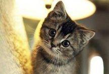 Animals / Cute pets