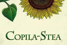 Copila-Stea, Jerry Spinelli - ilustrații de Mircea Pop
