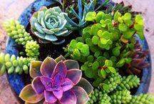 container succulent gardening
