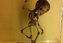Claudia's Travel Odditorium / Believe it or not! All the weird, obscure, creepy, odd and fun stuff I found in my travels around the world. Included roadside attractions, anatomical wax models and human skeletons. Welcome to my freakshow!