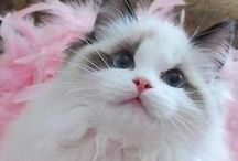 in love with cats / cutest cats