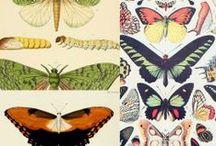 Butterflies illustrations