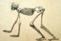 Skeleton illustrations / En biología, el sistema esquelético es el sistema biológico que proporciona soporte y apoyo a los tejidos blandos y músculos en los organismos vivos. El sistema esquelético tiene funciones de locomoción, sostén y protección. Los vertebrados presentan un esqueleto interno o endoesqueleto, constituido por huesos, que se unen entre sí por las articulaciones. La ciencia que se encarga de estudiar los huesos se denomina osteologia.