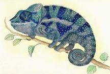 Caméléon illustrations / Los camaleones son una familia de pequeños saurópsidos escamosos. Existen cerca de 161 especies de camaleones, la mayor parte de ellas en África al sur del Sáhara.