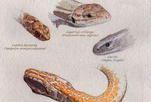 Snake illustrations