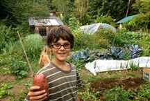 Organic Gardening / We homestead on five acres in the Pacific Northwest wilderness, where we grow a lot of organic vegetables and fruits.  Raising your own food is more nutritional and cheaper than buying it after it has been shipped many miles.