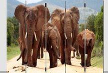 Olifant / Keep Calm and Love Elephants! De leukste inspiratie, plaatjes, klokken en kamerschermen met Olifanten!
