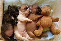 cute animals / by rosie mills