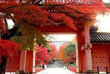 Le Japon , ma vie ❤