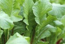 Growing VEGETABLES | FRUIT
