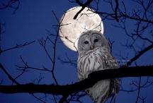 Owls - Gufi / by Silvia Susanna