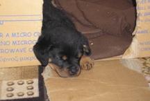 my love, my dog, my toutou!!!