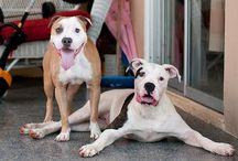 Dogs / by Cauã Ribeiro