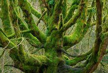Nature / by Cauã Ribeiro