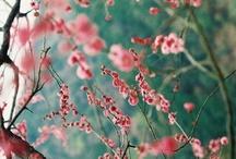 Teal & Pink