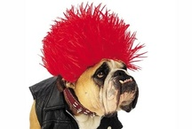 Halloween Pet Costumes / All the latest Halloween new costumes for pets! Visit now http://halloweennewcostumes.com