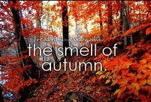 Fall / There is no more beautiful season than fall <3 / by Amber King