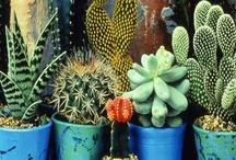 Cacti // Succulents