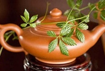 Homeopathy - Drinks,Elixrs,Tea ect. / by Tana Wysong