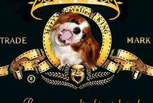Cavalier King Charles Spaniël Dogs / by WOEFERS hondenboetiek