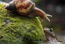 Ο θαυμαστος κοσμος της φυσης / The wonderful world of natur / Εικονες γεματες  ομορφια