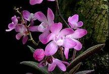 Χλωριδα / Flora