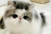 Ljubavnica mačaka / by Hevel Cava ♚♌