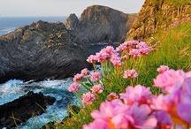 Faszinierende Blüten / by Hevel Cava ♚♌